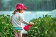 Plantas de tomate de pulverização do jardineiro feliz da menina na estufa imagens de stock