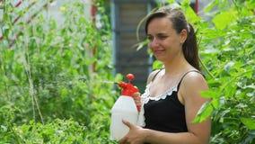 Plantas de tomate de rociadura femeninas con una botella del espray almacen de video