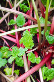 Plantas de torta Imagem de Stock Royalty Free