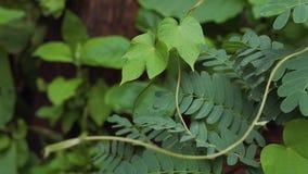 Plantas de vid en jardín metrajes