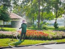 Plantas de Watering Colorful Flowering do jardineiro no parque fotografia de stock royalty free