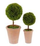 Plantas decorativas Fotos de Stock