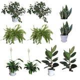 Plantas decorativas ilustração do vetor