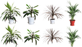 Plantas decorativas Foto de Stock