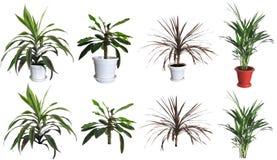 Plantas decorativas Foto de Stock