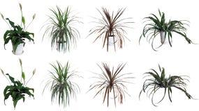 Plantas decorativas ilustração stock