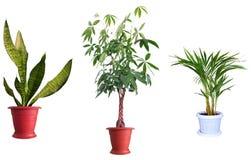 Plantas decorativas imagens de stock