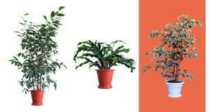 Plantas decorativas Imagem de Stock Royalty Free