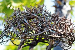 Plantas decorativas Fotos de Stock Royalty Free
