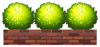 Plantas decorativas Foto de Stock Royalty Free