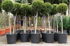 Plantas decorativas Foto de archivo libre de regalías