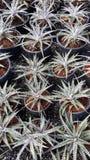Plantas decorativas Imagens de Stock Royalty Free