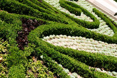 Plantas decorativas Imagem de Stock