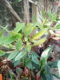 Plantas decorativas bonitas Foto de Stock