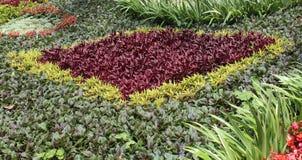 Plantas decorativas do jardim Fotos de Stock