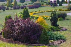 Plantas decorativas e flores Imagem de Stock Royalty Free