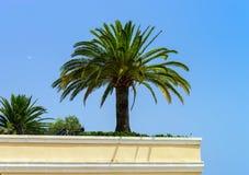 Plantas decorativas en las calles de Mónaco foto de archivo libre de regalías