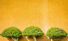 Plantas decorativas na parede Fotografia de Stock Royalty Free