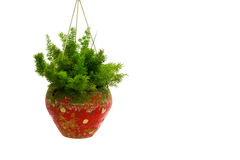 Plantas decorativas no potenciômetro isolado no fundo branco fotografia de stock