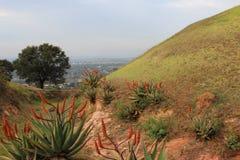 Plantas del áloe que crecen en una reserva de naturaleza Fotos de archivo libres de regalías