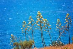 Plantas del agavo Fotos de archivo
