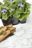 Plantas del Ageratum con los dibujos del paisaje Imagen de archivo libre de regalías