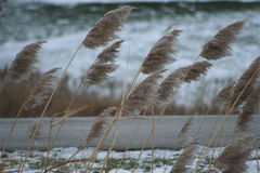 Plantas del borde de la carretera que doblan en el viento Fotografía de archivo