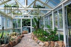 Plantas del cactus Fotografía de archivo libre de regalías