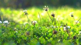 Plantas del campo en prados almacen de video