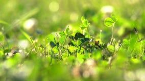 Plantas del campo en prados metrajes