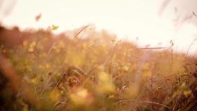 Plantas del campo que se sacuden al viento almacen de video
