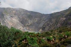 Plantas del cráter Imagenes de archivo