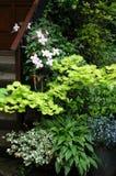 Plantas del grupo en el lugar del jardín de la sombra Fotografía de archivo