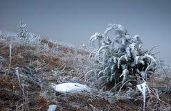 Plantas del invierno Foto de archivo