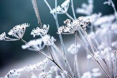 Plantas del invierno Imágenes de archivo libres de regalías