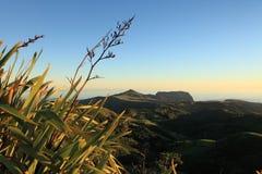Plantas del lino en la isla de St. Helena de la luz del amanecer Imagen de archivo libre de regalías