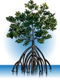 Plantas del mangle del vector Fotos de archivo