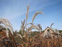 Plantas del otoño contra el cielo Imagen de archivo