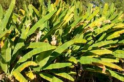 Plantas del pantano de Lousiana Fotos de archivo