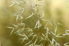 Plantas del prado Foto de archivo libre de regalías
