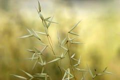 Plantas del prado Fotos de archivo libres de regalías