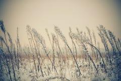 Plantas del prado del invierno Fotografía de archivo libre de regalías
