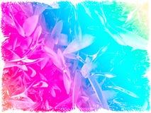 Plantas del purpurea del pallida del Tradescantia - arco iris Foto de archivo libre de regalías