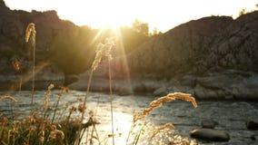 Plantas del río de la puesta del sol de la naturaleza almacen de video