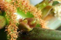 Plantas del riñón, lanzamiento verde, planta exótica, planta espesa Foto de archivo