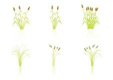 Plantas del trigo Fotografía de archivo