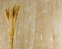 Plantas del trigo en fondo de madera Imagen de archivo