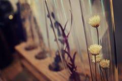 Plantas del tubo de ensayo Fotos de archivo libres de regalías