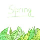 Plantas del vector del fondo de la primavera Imagenes de archivo