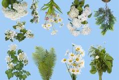 Plantas delicadas da mola em ciano fotos de stock